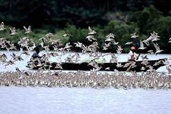 Paisagem com embarcação sobre água ao fundo e diversas aves